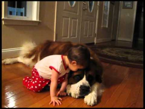 HUGE DOGS LOVE SMALL BABIES