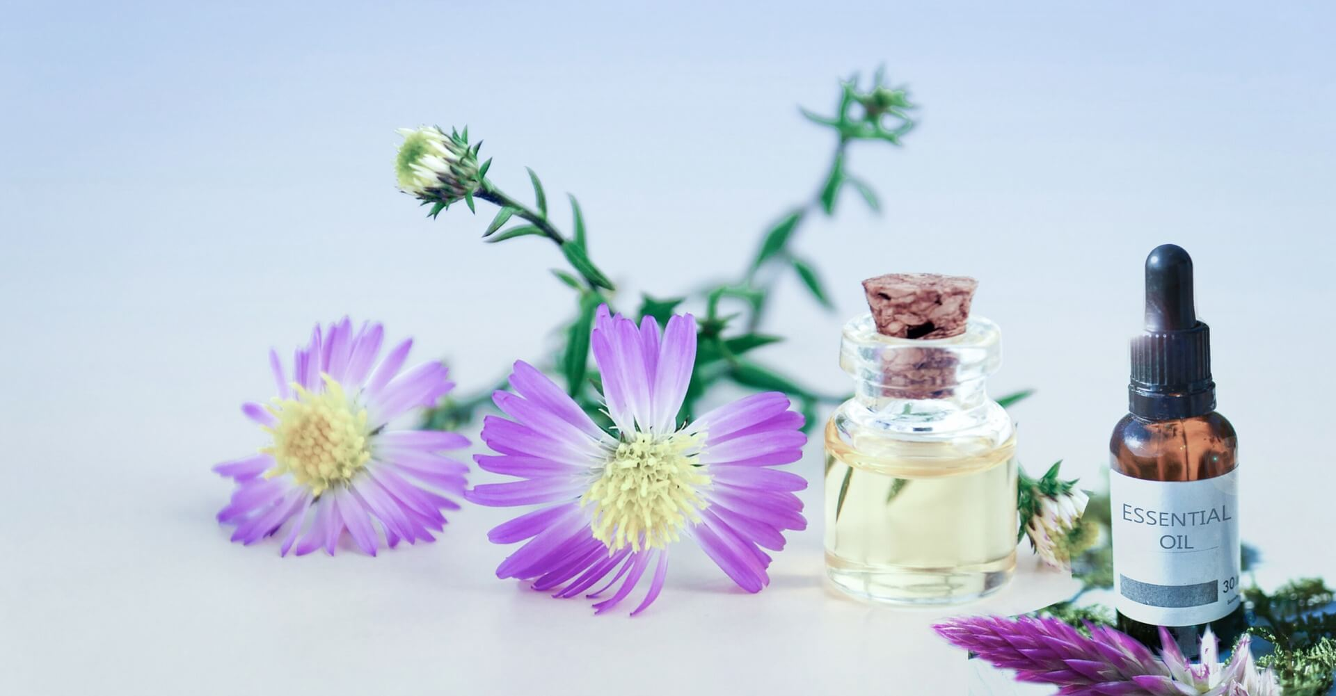 essential oils safe for dogs